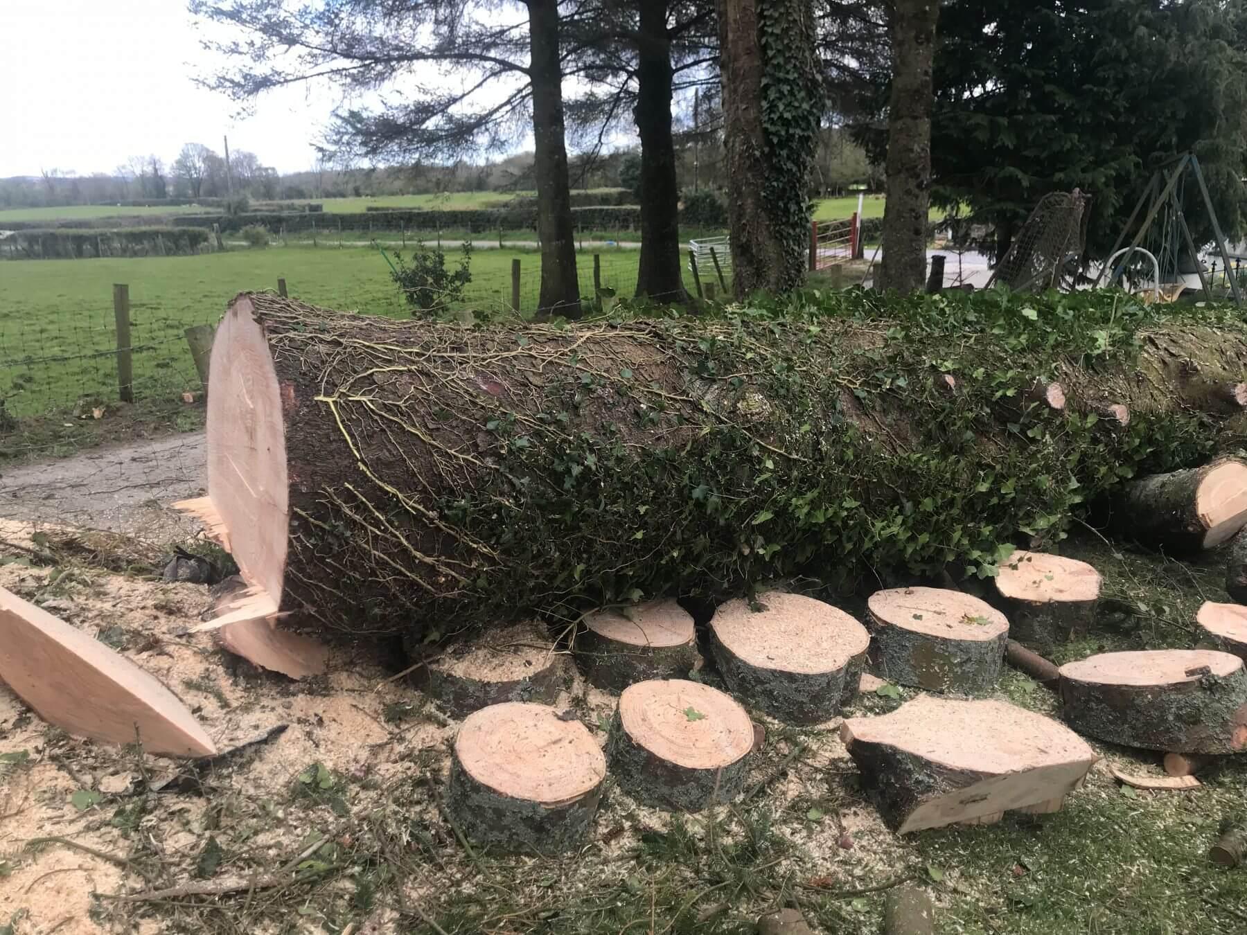 Bradley Tree Services